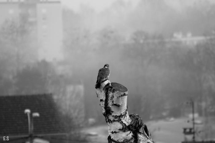 2015_03_pigeon_site